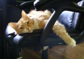 Cat-Sitters-Pet