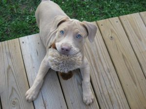 Pet Sitting in Lansdale PA