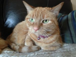 Cat Sitter North Wales PA