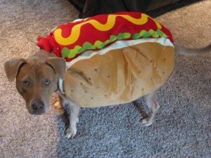 Dog Walking in Lansdale PA