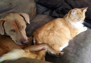 Pet Care in Hatfield PA