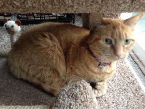 Cat Sitting in Hatfield PA