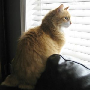 Cat sitting in Lansdale PA