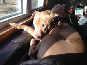 Pet Sitter in Lansdale PA