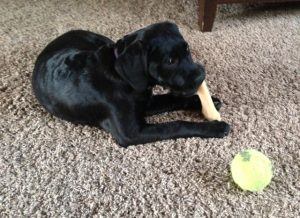 Pet Sitter in Lansdale