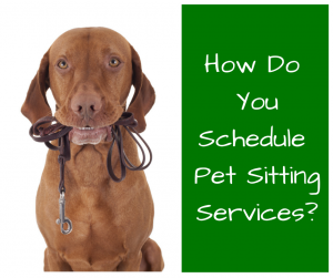 How Do YouSchedulePet Sitting Service-