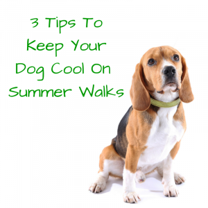 3 Tips ToKeep Your PupCool OnSummer