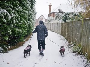 North Wales pet sitter