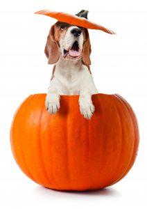 Hatfield dog walker