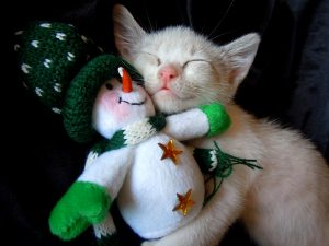 kitten cuddling with snowman toy