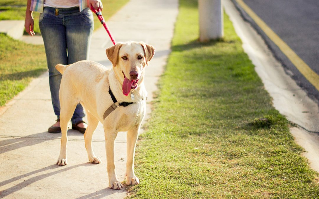 3 Pet Care New Year's Resolutions