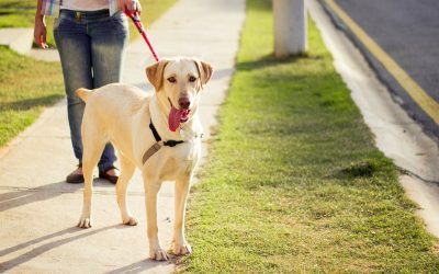 How Does A Dog Walking Referral Program Work?