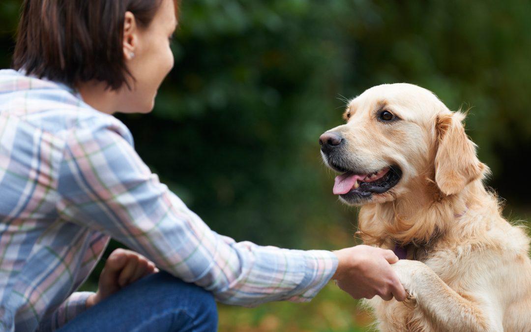 North-Wales-Dog-Walker-And-Dog
