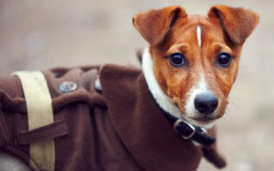 3 Ways to Make Winter More Fun For Your Dog