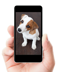 text message from your pet